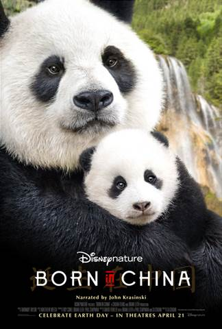 14 fun facts about pandas borninchina sarah scoop in honor of this incredible movie coming out next month here are 14 panda fun facts that you should know before you see the movie voltagebd Choice Image