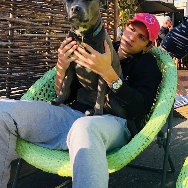 Tom Holland with his dog Tessa