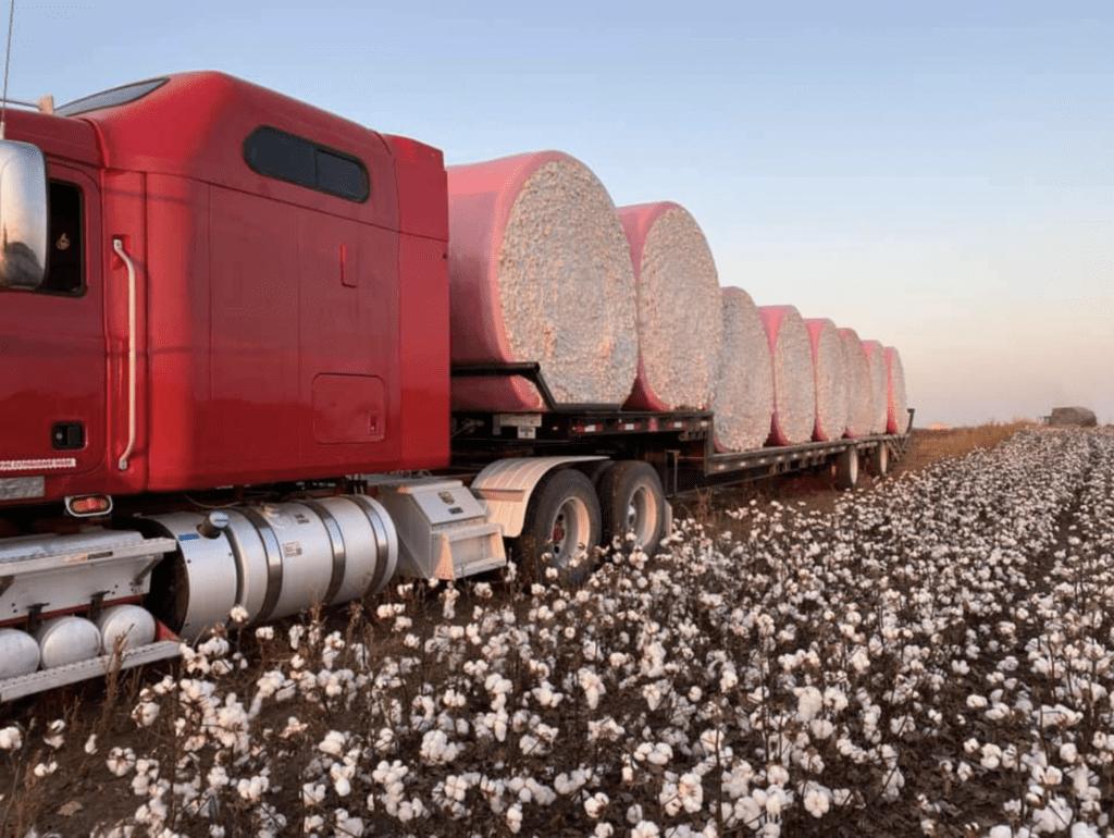 Moreland Farms cotton